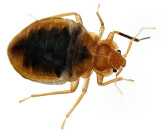 Bed Bug Exterminator In Jackson MS